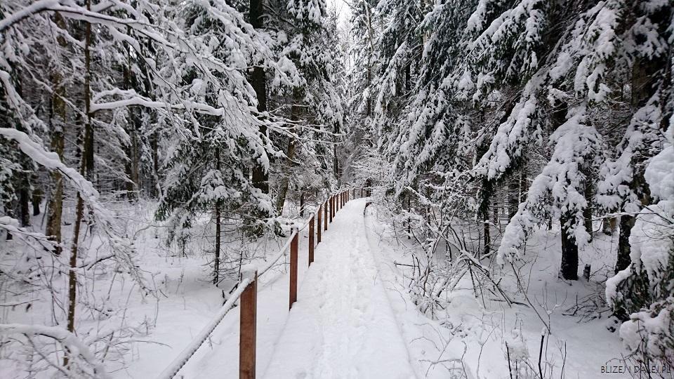 """Biała zima na szlaku """"Żebra Żubra"""", Białowieża"""